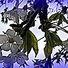 Spring Blooms with Special Effects by debbiedoda