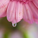 Flower in a Raindrop by Elaine123