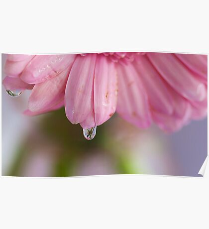 Flower in a Raindrop Poster