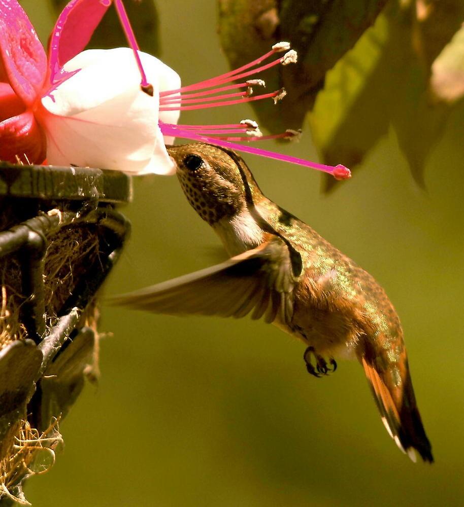 Ahhhhhhh...Nectar by RoseMarie747