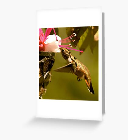 Ahhhhhhh...Nectar Greeting Card