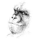 « Illustration Gorille » par silowane