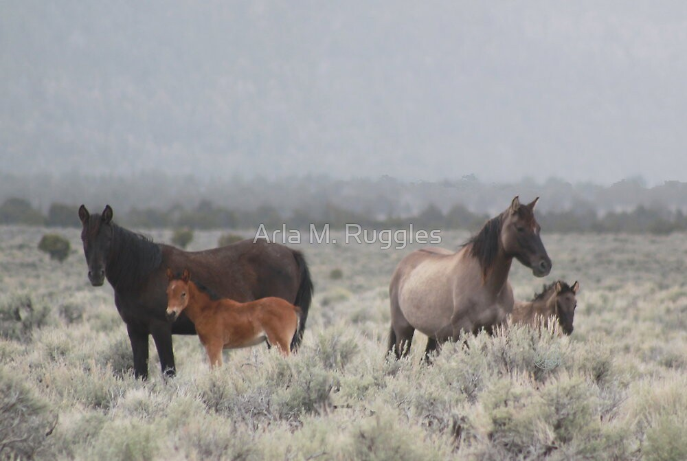 Red Butte Band of Wild Horses by Arla M. Ruggles