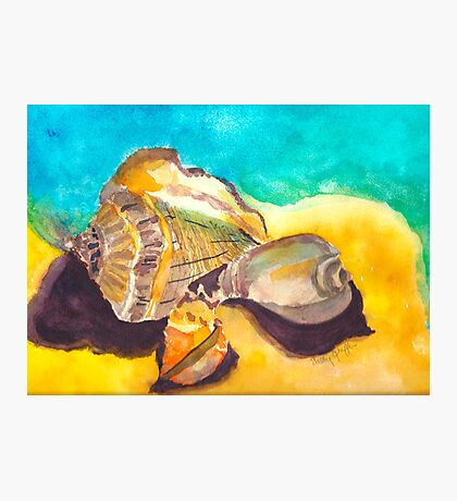 Shells in Paradise Photographic Print
