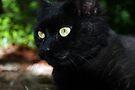 Big Green Eyes by jodi payne