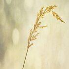 Golden Grass by Denise Abé