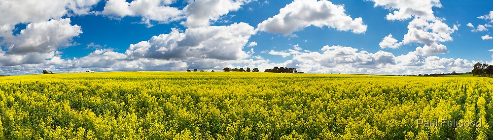 Northam Canola Clouds by Paul Fulwood