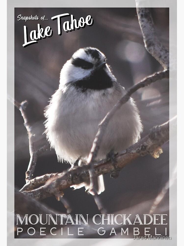 Snapshots of Tahoe: Mountain Chickadee by JaredManninen