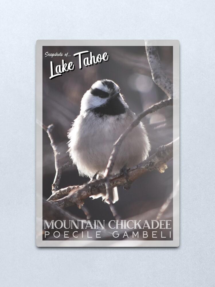 Alternate view of Snapshots of Tahoe: Mountain Chickadee Metal Print
