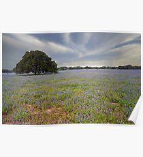 Bluebonnets & Oak Tree Poster