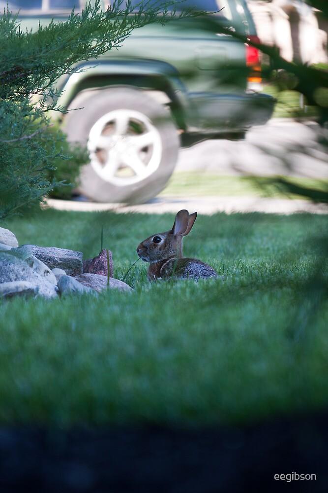 Rabbit in Suburbia by eegibson