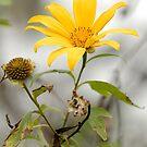 Lone Flower by Alexander Gitlits