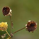 Dead Flower by Alexander Gitlits