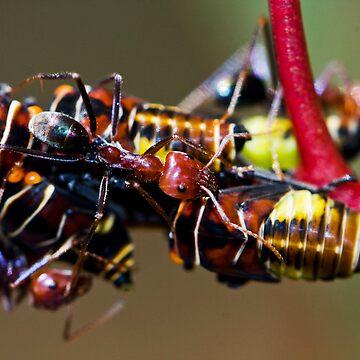 Ant Invasion by skeeter