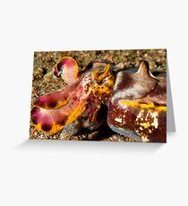Flamboyant Cuttlefish - Dauin Philippines 2010 Greeting Card