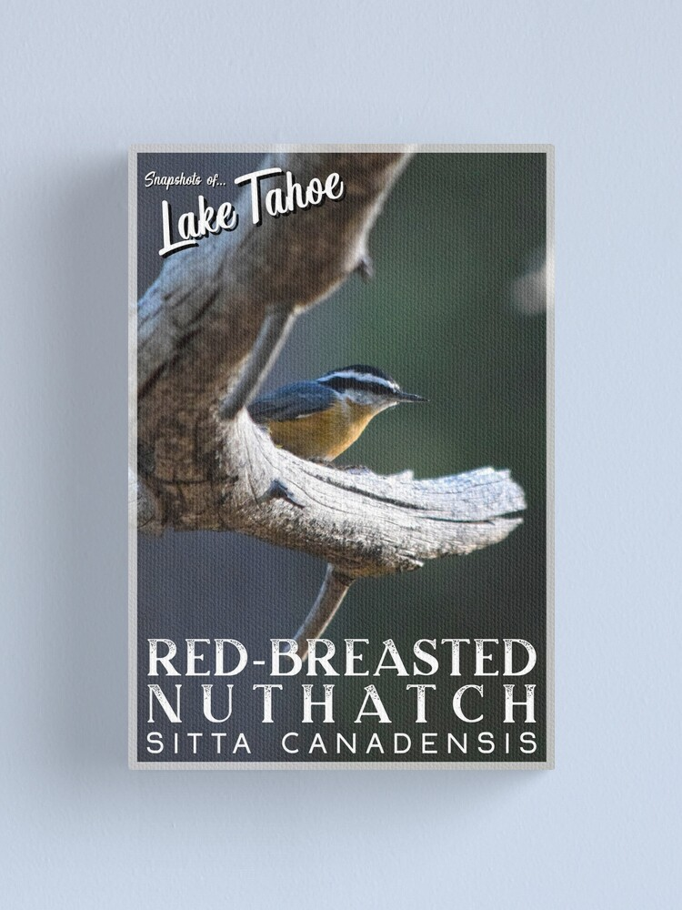 Alternate view of Snapshots of Tahoe: Red-Breasted Nuthatch Canvas Print