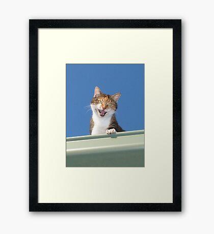 Hello Mabel Framed Print