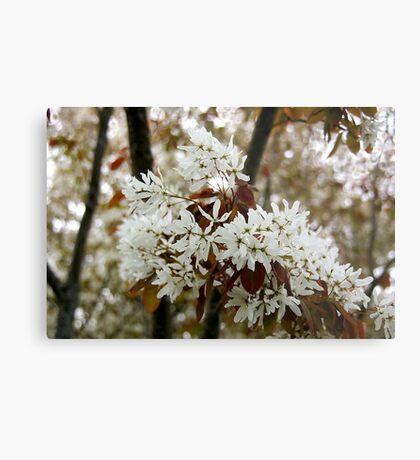 Spring white Metal Print