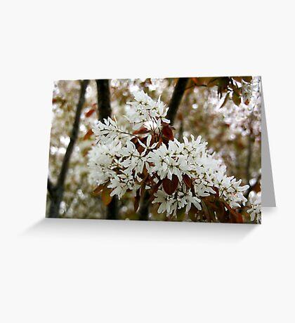 Spring white Greeting Card