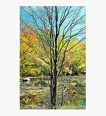 Autumn leaves in pond Photographic Print