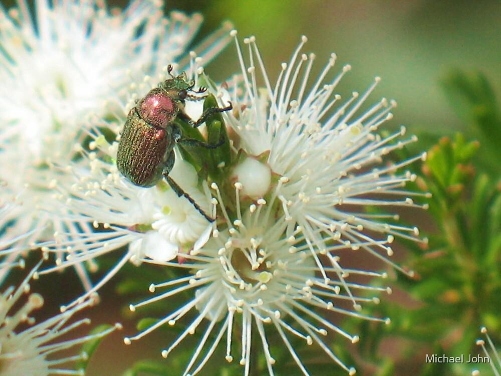 Jewel Beetle by Michael John