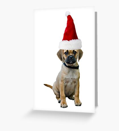 Puggle Christmas Greeting Card