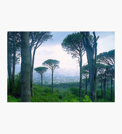 Capetown Trees, South Africa Photographic Print