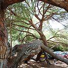 Reptilian Tree Western Australia by Deirdreb