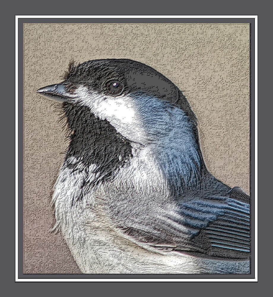 CHICKADEE IN PENCIL by BOLLA67
