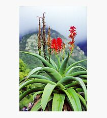 Capetown Foliage, South Africa Photographic Print