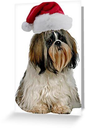Shih Tzu Christmas by CafePretzel