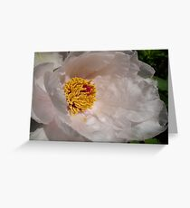 White Tree Peony Greeting Card