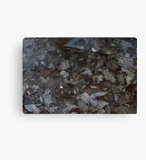 Leaves and ripples Canvas Print