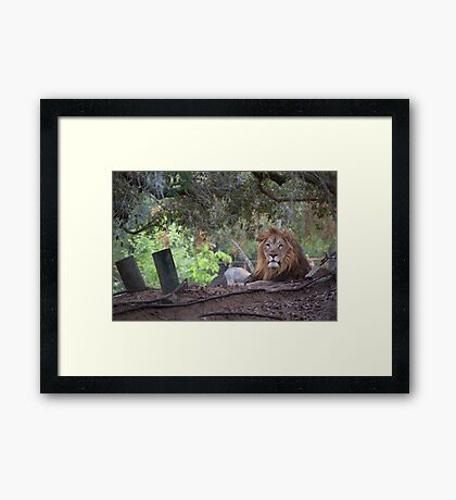 Ruler of all he Surveys Framed Print