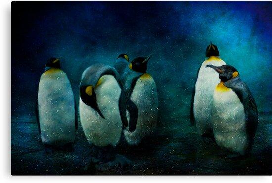 Cold Penguins by ajgosling
