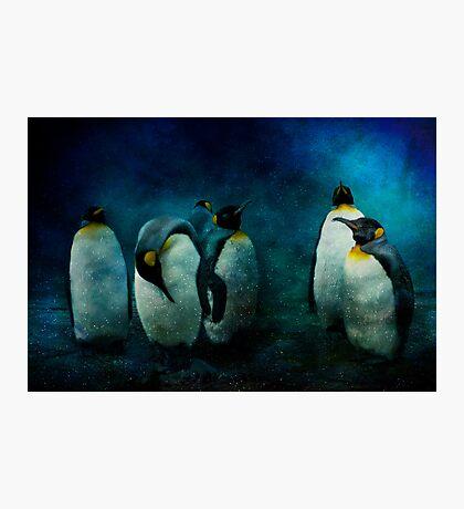 Cold Penguins Photographic Print