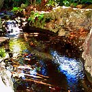 Ferndale Creek by Randy Sprout