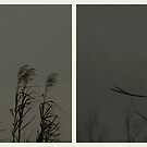 Two Grasses ( Everglades Grasses)  by Elizabeth Rodriguez