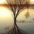 Morning in Whitefish by Breanna Stewart