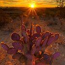 Desert Awakening by Sue  Cullumber