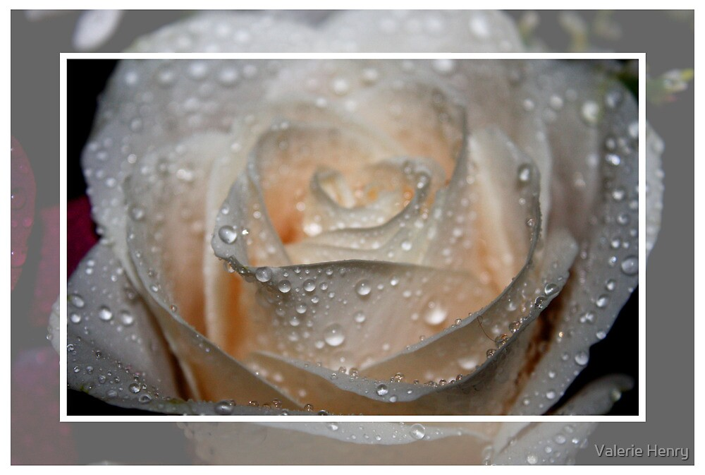 Raindrops and the Rose by Valerie Henry