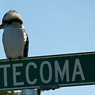 Kookaburra On Tecoma by DEB CAMERON