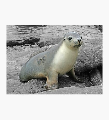 A friendly seal Photographic Print
