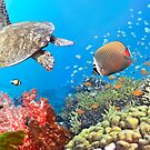 Underwater panorama by MotHaiBaPhoto Dmitry & Olga