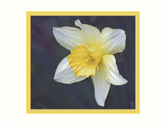 DAFFODIL IN PENCIL by BOLLA67