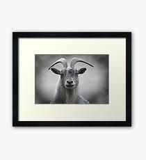 Old Goat Framed Print