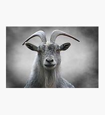 Old Goat Photographic Print