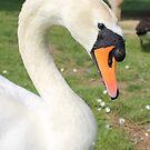 Swan Lake by Abigail Jennings