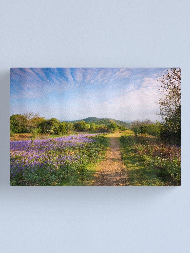 Alternate view of Malvern Hills : Midsummer Bluebells 2 Canvas Print