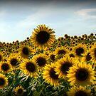 Happy Sunny Sunflowers by Monica M. Scanlan